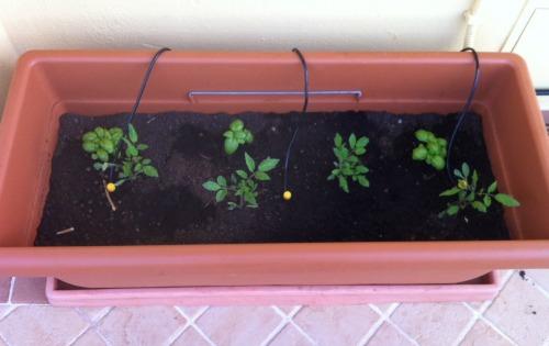 allestire orto sul terrazzo 1