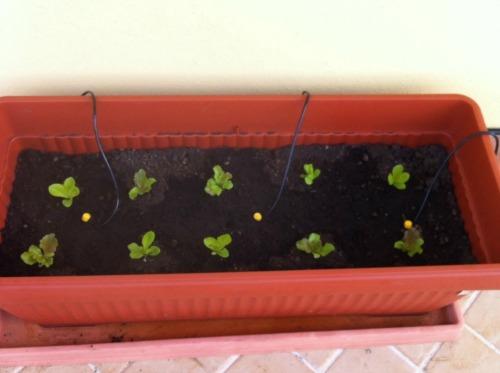 allestire orto sul terrazzo 2-3