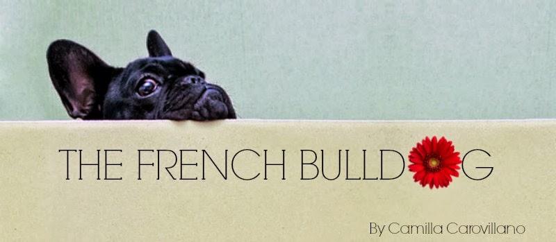 french-bulldog-puppy-retales-botijero (1)
