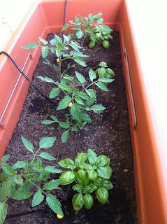 Orto sul balcone impianto d 39 irrigazione fai da te for Orto sul terrazzo fai da te
