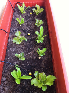 Impianto-irrigazione-per-orto-sul-balcone-MammaMoglieDonna