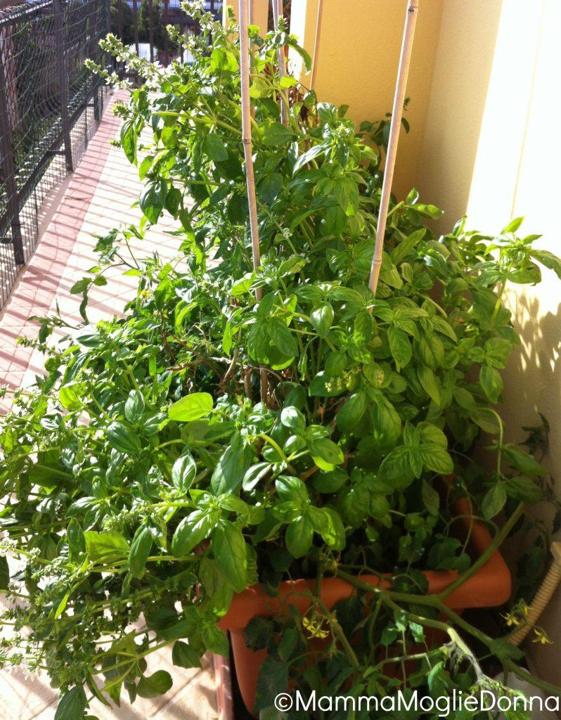 orto sul balcone - ottobre