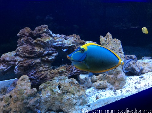 pesci Alieni bioparco roma 2
