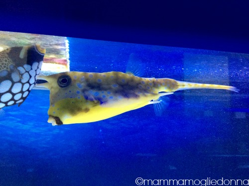pesci Alieni bioparco roma 5