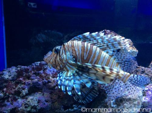 pesci Alieni bioparco roma