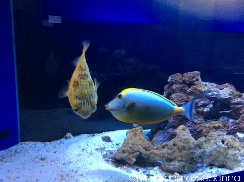 pesci alieni bioparco roma 3