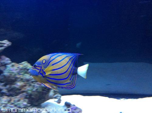 pesci alieni bioparco roma 4