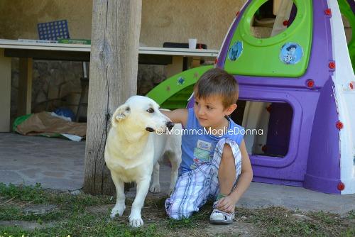 prendersi cura animale domestico