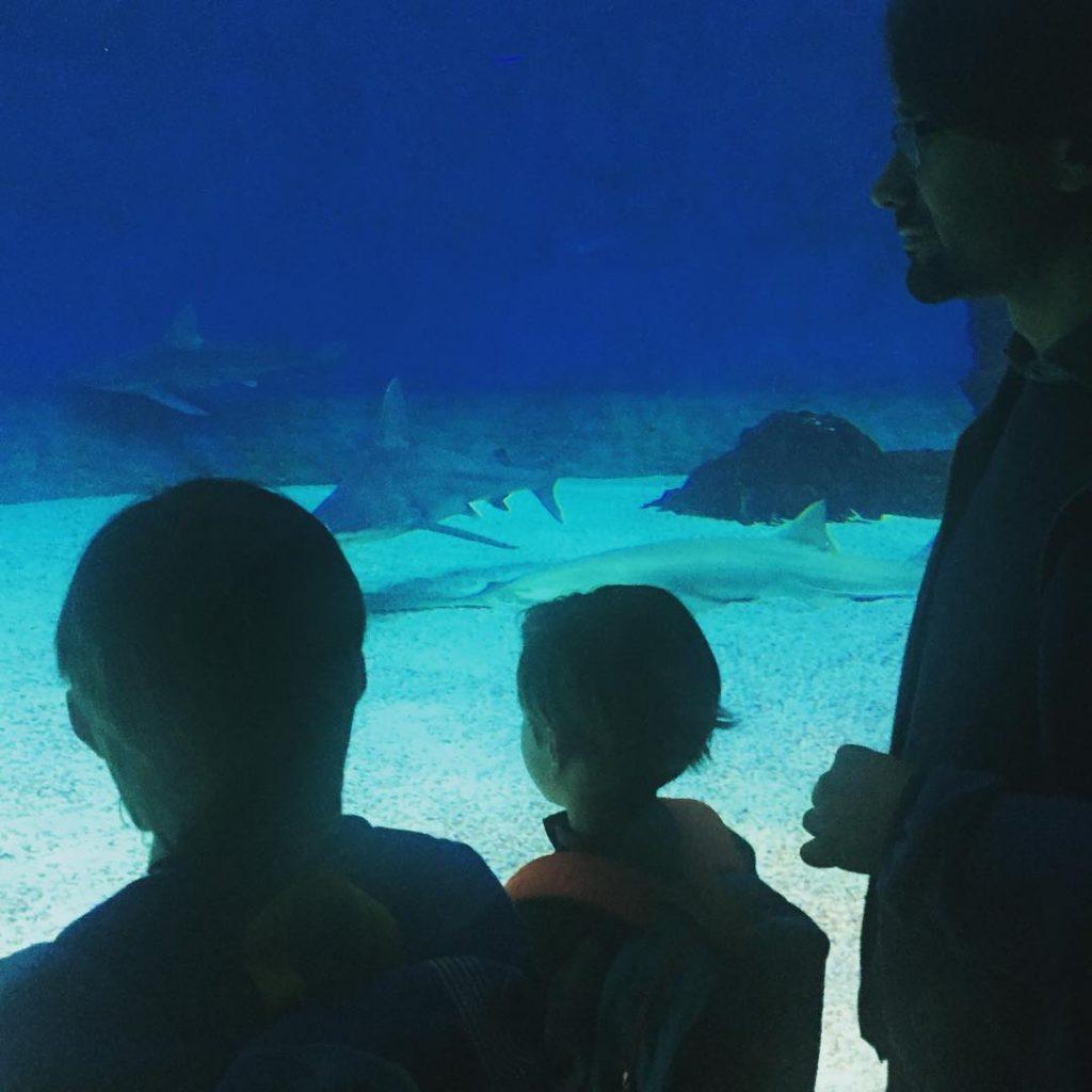 Incantati davanti agli squali thefamilygoestoGenova acquariodigenova igersgenova acquariodigenova genovagram genova