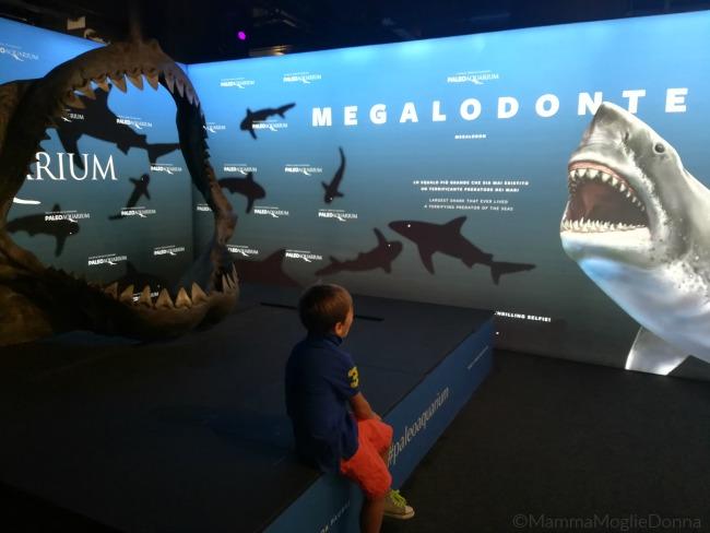 Paoleoaquarium in mostra a Genova il mare al tempo dei dinosauri 2