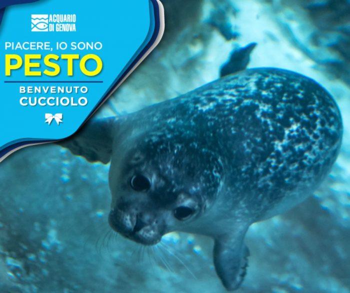 Cucciolo foca acquario di Genova